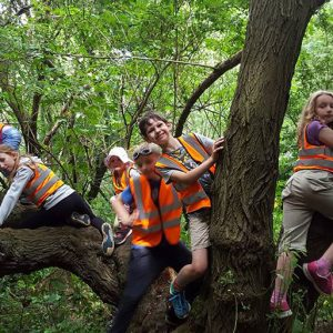 Children playing in tree in Savernake Avenue Holiday Club